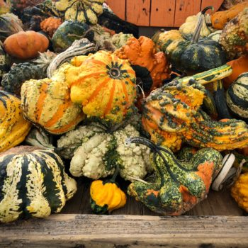 Huber's Orchard…  Good for the Gourd